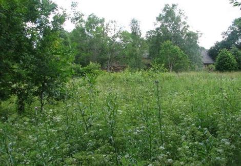 Pļava Jaundundagā aiz pagasta nama (tagad pansija