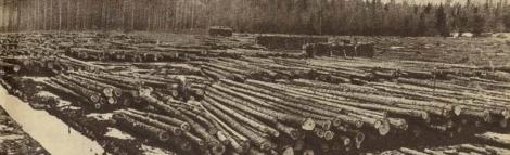 """Lielajos Dundagas mežos guļ milzīgi """"zaļā zelta"""" krājumi, kuru izvešana būs jāveic jaunajam dzelzceļam (Atpūta, 09.03.1934.)"""